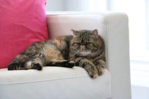 cat-1206539_640